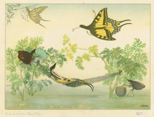[Butterflies at leisure.] Digital ID: 1701324. New York Public Library