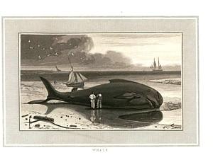 Whale. Digital ID: 479933. New York Public Library