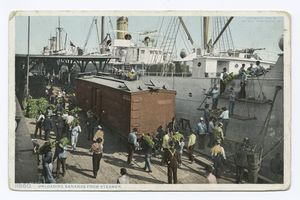 Unloading Bananas from Steamer... Digital ID:                            69700. New York Public Library