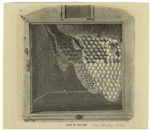 Hive of the bee. Digital ID: 806354. New York Public Library