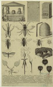 [Bees and beekeeping.] Digital ID: 806364. New York Public Library