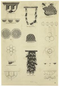 Honeycombs. Digital ID: 806368. New York Public Library