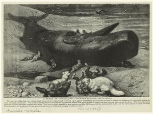 A scene in Greenland - Pot-wha... Digital ID: 823816. New York Public Library