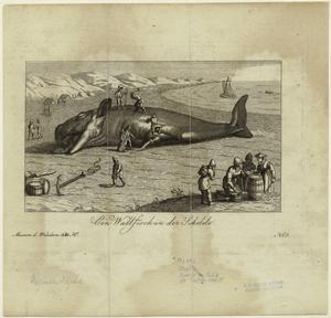 Ein Wallfisch in der Schelde. Digital ID: 823820. New York Public Library