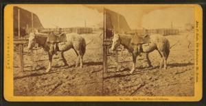 Woolly Horse of California. Digital ID: G92F129_022F. New York Public Library