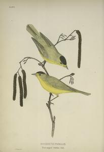 The birds of eastern North America; with original descriptions of all the species which occur east of the Mississippi River, between the Arctic circle and the Gulf of Mexico, with full notes upon their habits, etc.