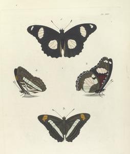 1. 2. Nymphalis Bolina (Upper side and Under side); 3. 4. Nymphalis Iphicla (Upper side and Under side).