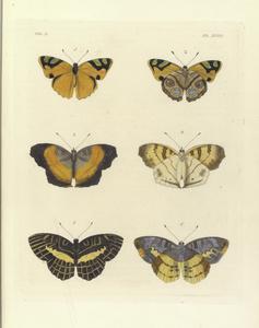 1. 2. Nyphalis Cadma ; 3. 4. Vanessa Terea; 5. 6. Nymphalis Opis.
