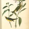 Wilson's Flycatching-Warbler, 1. Male 2. Female (Snake's Head. Chelone Glabra.)