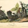 Canada Grouse, 1. and 2. Males 3. Females (4. Trillium pictum. 5. Streptopus distortus.)