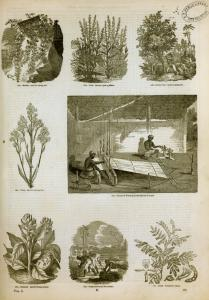 [Textile industry: plants for dyes, weaving in Ceylon.]
