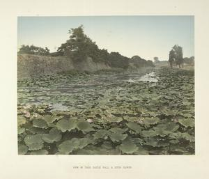 View of Tokio Castle Wall & Lotus Flower