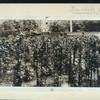 [Garden of George Bancroft, Washington, D.C.]
