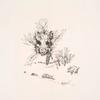 [Décor de plat : trophée composé de la hure et du pied d'un sanglier, et des feuilles d'une branche de laurier....]