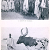 A group of Tuaregs.; A Bornu ox.