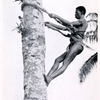 Climbing a palm - tree for nuts and wine.