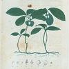Gaultheria procumbens. (Partridge Berry).