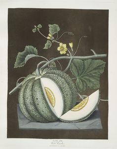 White candia (melon).