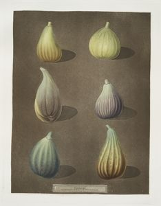 [Fig varities (White Hanover, White Marseiles, Brown Naples or Italian, Purple, Green Ischia and the Brunswick).]