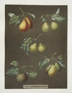 [Pears (Catherine, Lemon, Late muscat, Onion, or le Gross Oignonet and the Long stalked blanquet varities).]