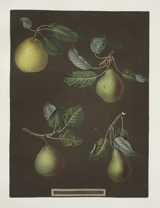 [Pears (Bergamot de Chantilly, Bouchee, Winter sweet sugar and the Bishop's Thumb varities).]