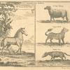 Animals from Kolben