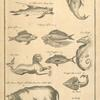 Fish and other African animals at the Cape
