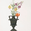 Lilium pomponium, Lilium chalcedonicum, Lilium martagon varieties