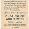 Teucrium corymboides [corymbosum](Corymb-flowered Teucrium).