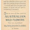 Actinotus, helianthi & minor (Flanel Flower-large & small).