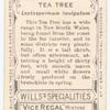 Tea Tree (Leptospermum laevigatum).