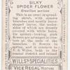 Silky Spider Flower (Grevillea sericea).