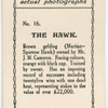 The Hawk. Trained by owner, Mr. J.M. Cameron.