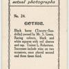 Gothic. Trainer L. Robertson.