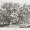 Oak trees, in Windwor Forest.