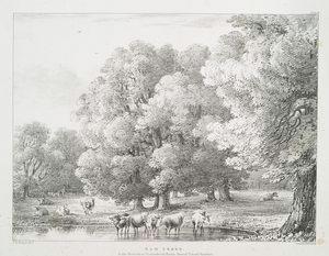 Elm trees, in the Grounds at Shottesbrook Berks, Seat of Colonel Vansittart.