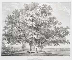 Queen Charlotte's tree, Windsor Forest. [Dedicated by permission to the Countess Harcourt.