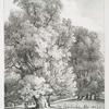 Elm trees, in Holme Park, Berks. Seat of Robt. Palmer Esqr.