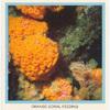 Orange Coral Feeding.