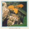 Demoiselle Reef Fish.