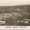 Quarry Woods, Marlow.