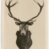 16-Pointer Deer.