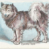 Eskimo Dog.
