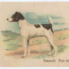 Smooth Fox-terrier.