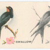 Swallow.