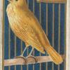 Canary.