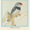 Dimond Sparrow.