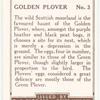 Golden Plover.
