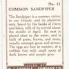Common Sandpiper.