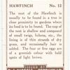 Hawfinch.